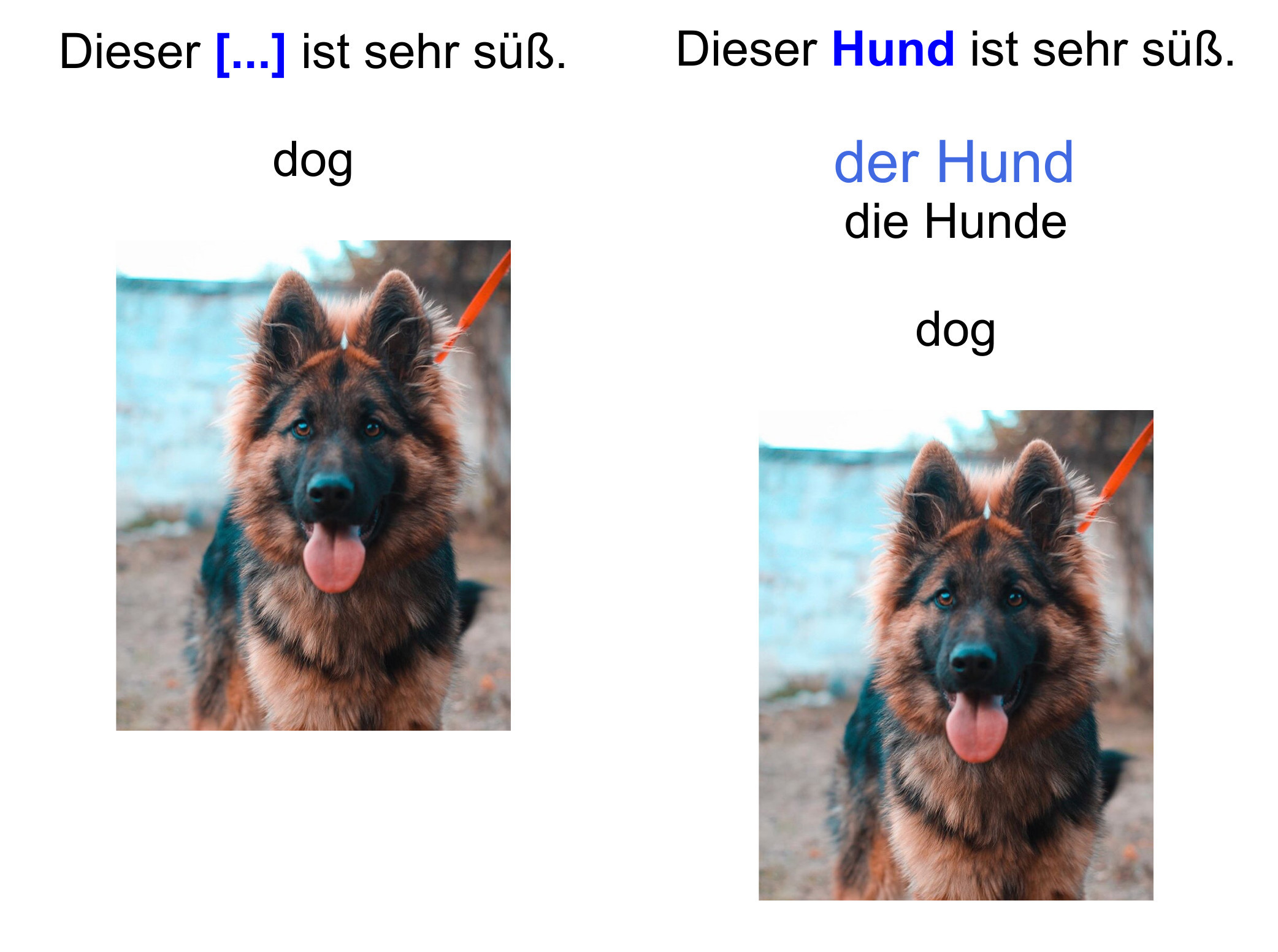 A German flashcard with automatically-generated cloze deletion.